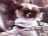19660715-LittleLeopard7