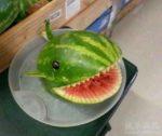 veggieshark